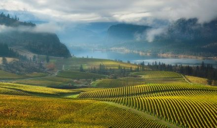 Bottle stops: 15 wine roads worth getting sidetracked on