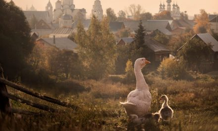 Lovely Suzdal, Vladimir Oblast, Russia[ 1200 x910 ][ OS] by Elena Shumilova
