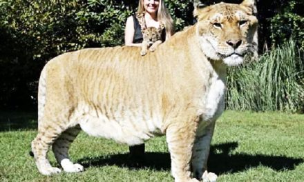 20 Strangest Hybrid Animal Breeds You Didnt Know Existed