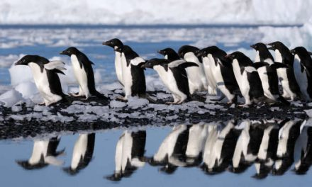 World's Largest Marine Protected Area Declared In Antarctica