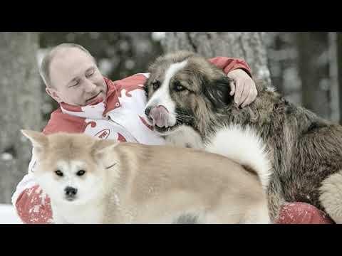 Vladimir Putin Lifestyle, Net Worth, Salary, Cars, Assets, Biography, Pets, College And putin information