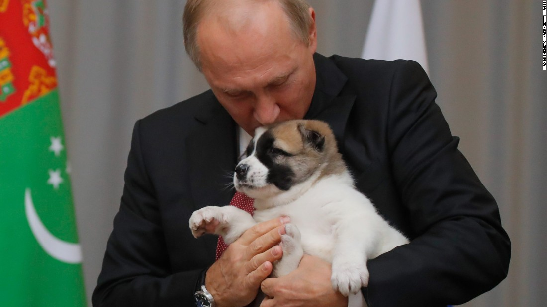 Pup- enthusiast Putin talented brand-new pet dog for birthday celebration