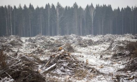 COP2 1: Prince Charles to name as woodland coverage – BBC News