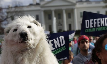It's time to discharge the polar bear