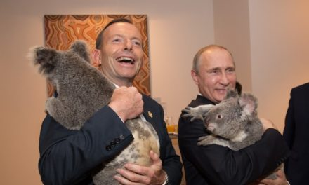 Australian federal government invests way too much on koala cuddling, claims Labor