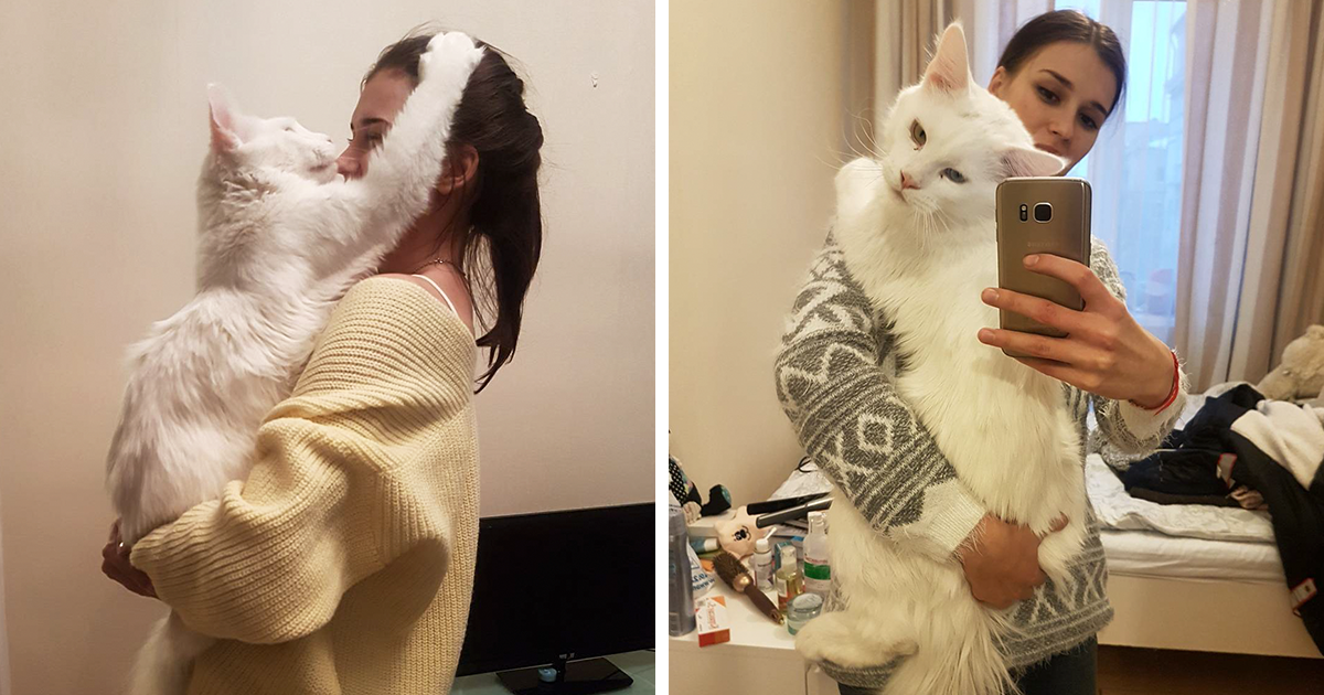 Kitty Grows Up Hugging His Human Every Day, Won' t Stop Even After Becoming A GIANT