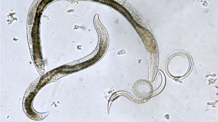 42,000-Year-OldNematodes Buried In Arctic Permafrost Come Back To Life After Thawing