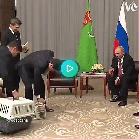 """Putin: """" -LRB- *****************) ' s not just how you hold a pupper, you idiot"""""""