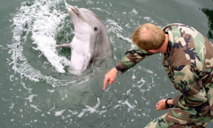 Ukraine's Military Dolphins Captured By Russian Forces- out Die After Apparently Rejecting To Defect