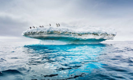 Environmentalists Plan To Create The World's Largest Wildlife Reserve In Antarctica