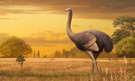 Giant Flightless Bird Standing 11 Feet Tall Unexpectedly Roamed Europe Alongside Early Humans