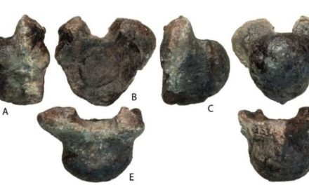 New Species Of Dinosaur Challenges What We Thought We Knew About Titanosaurs